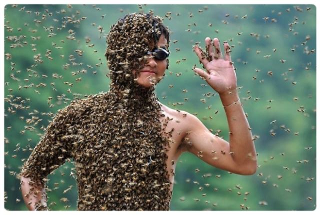 the-bee-beard-is-the-new-beard