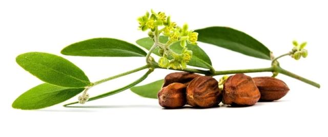 jojoba-oil-hair-benefits